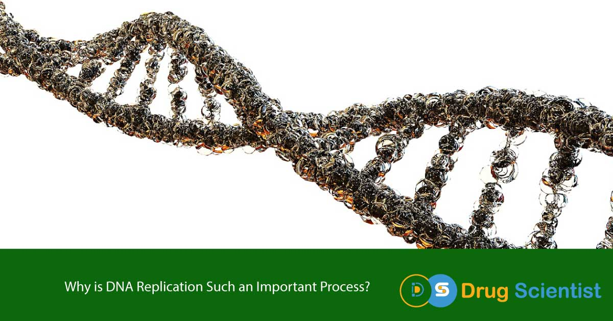Why is DNA Replication Such an Important Process?